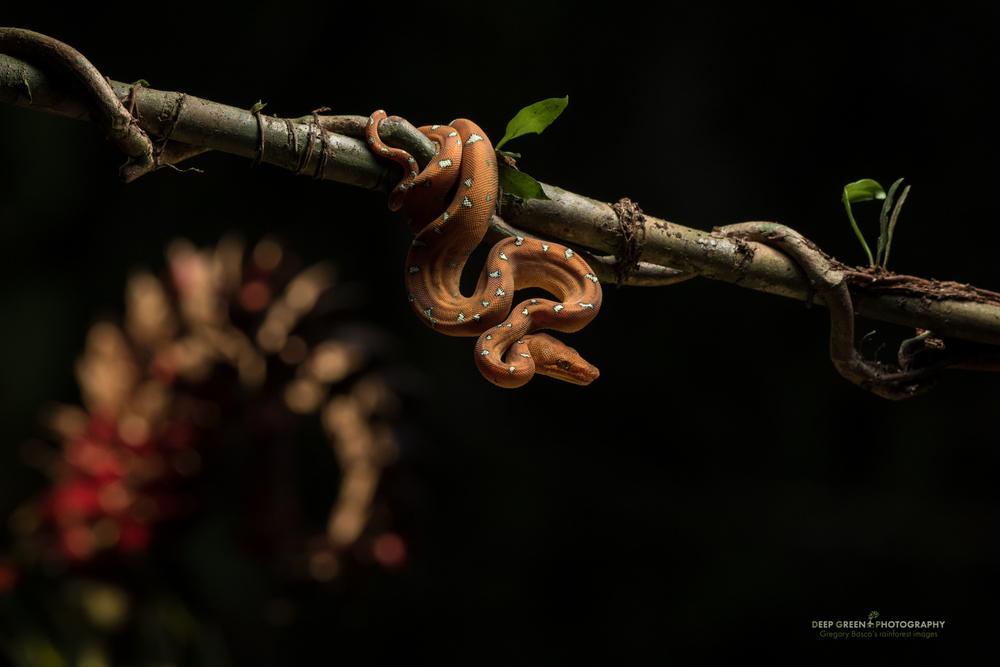 DGPstock-reptiles-130.jpg
