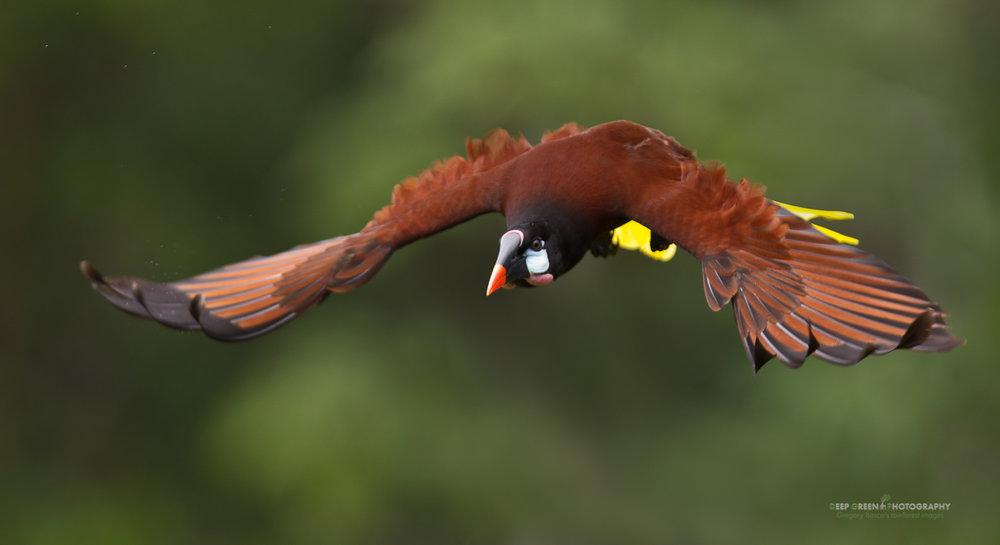 DGPstock-birds-68.jpg