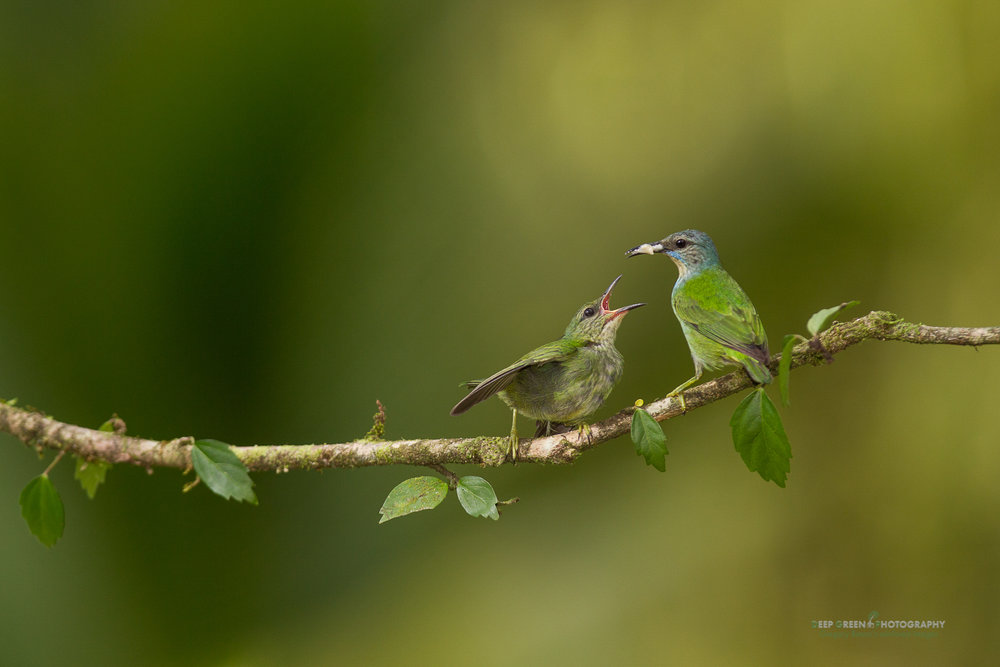 DGPstock-birds-74.jpg