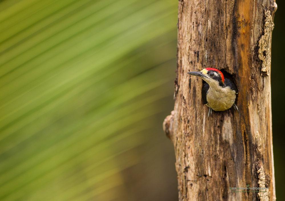 DGPstock-birds-110.jpg