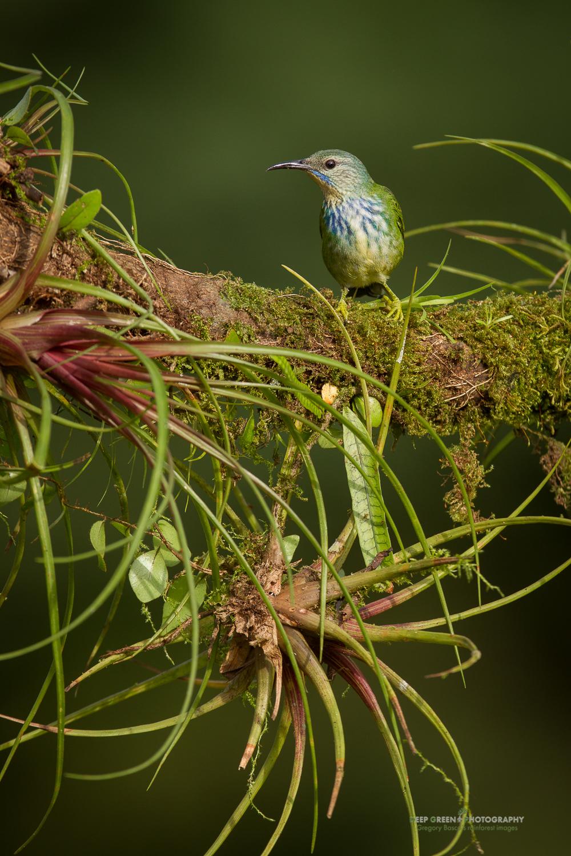 DGPstock-birds-116.jpg