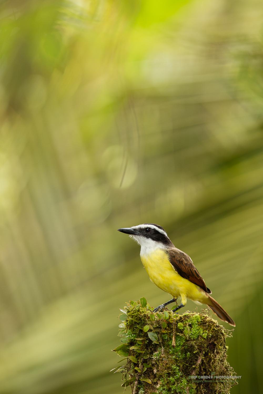 DGPstock-birds-179.jpg