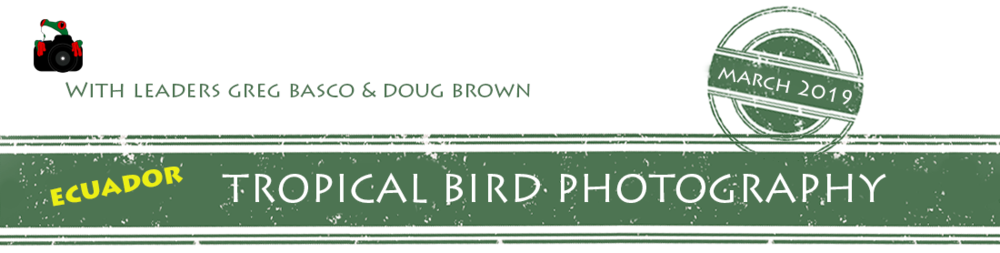 Ecuador-Tropical-Bird-Photography-2019-banner.png
