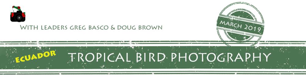 Ecuador-Tropical-Bird-Photography-2019-banner.png