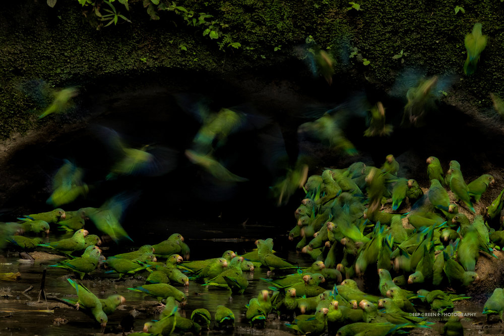 DGPprints-parakeet central.jpg
