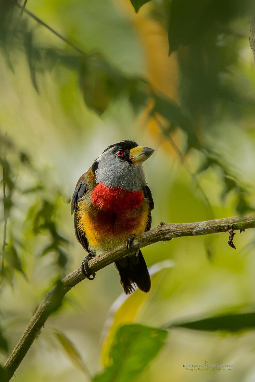 DGPstock-birds-236.jpg