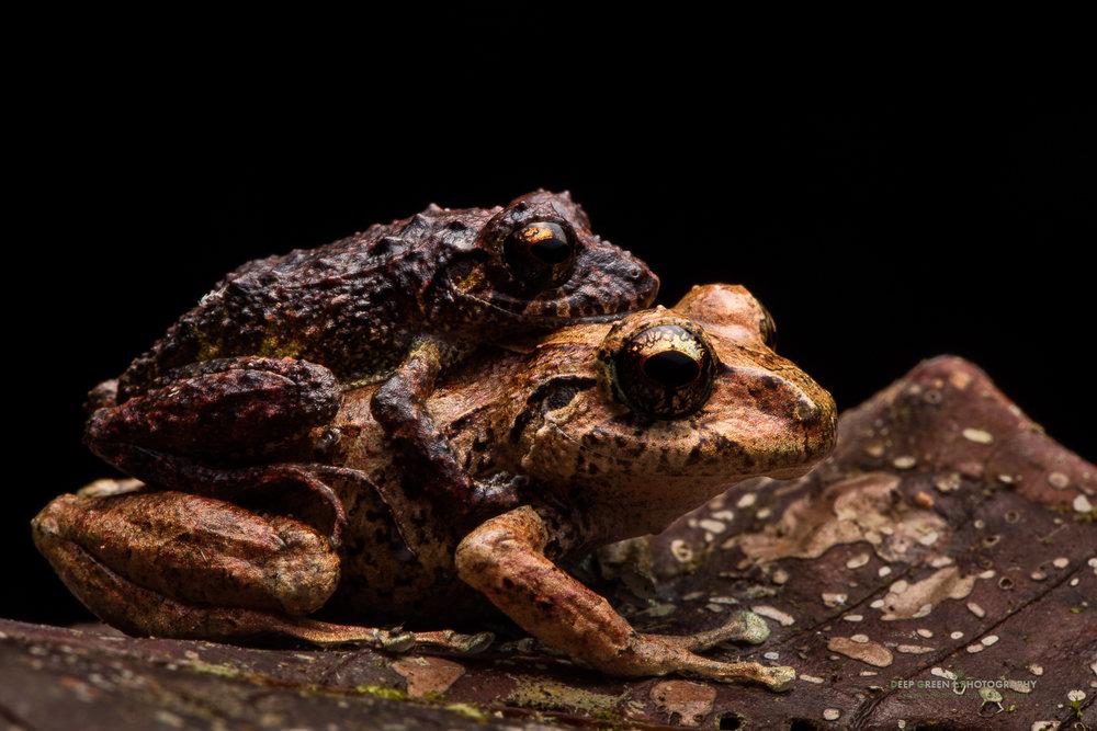 DGPstock-frogs-61.jpg