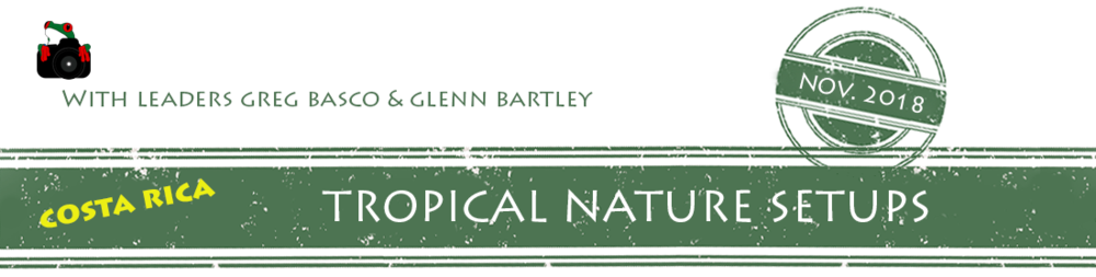 tropical-nature-setups-2018-banner.png