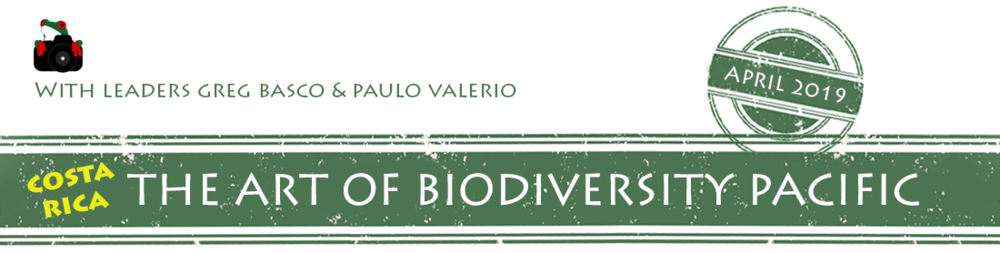 the-art-of-biodiversity-pacifc-2019-banner.png