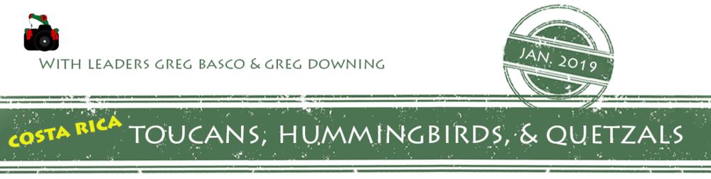 toucans-hummers-quetzals-2019-banner.png