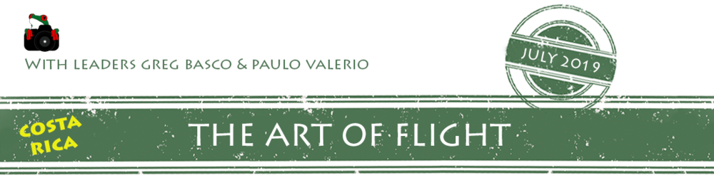 the-art-of-flight-2019-banner.png