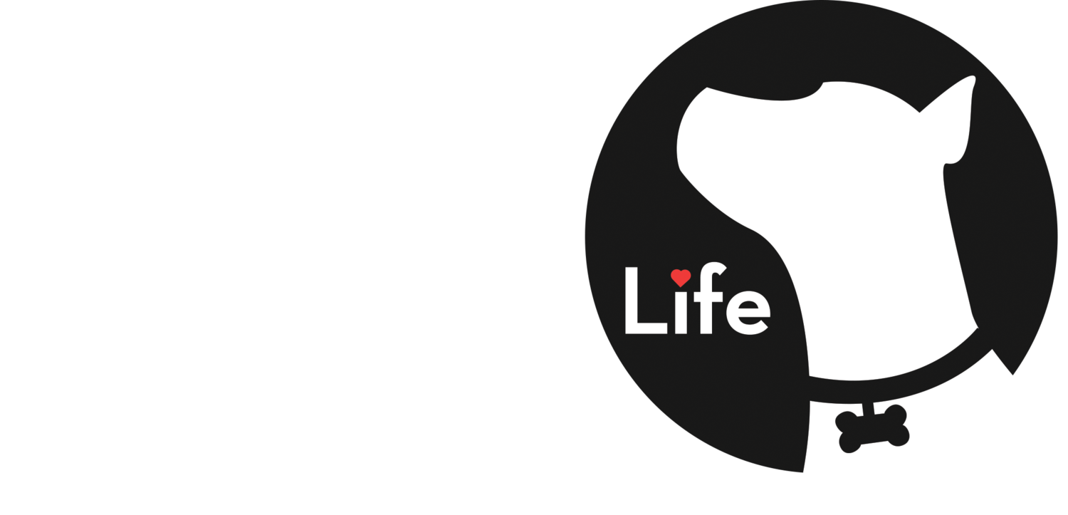 New Leash on Life Chicago