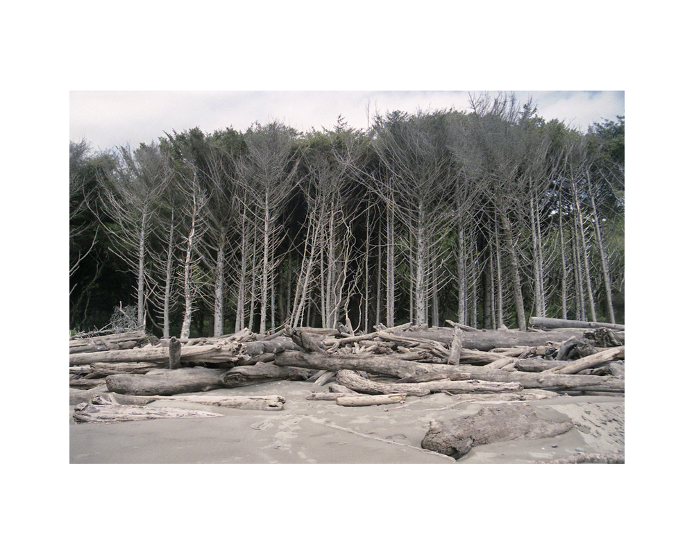 Kalaloch Beach Trees