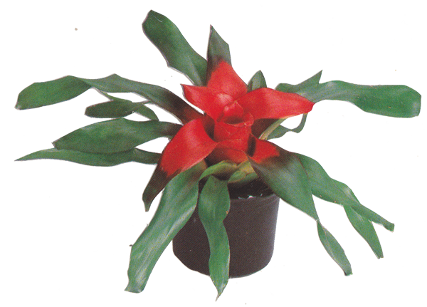 vase plant left.png