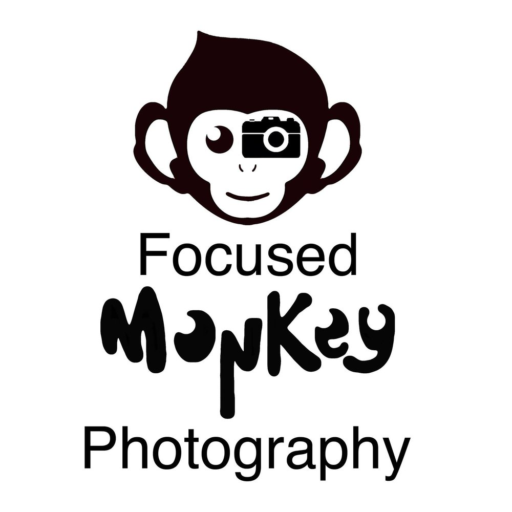 Focused Monkey