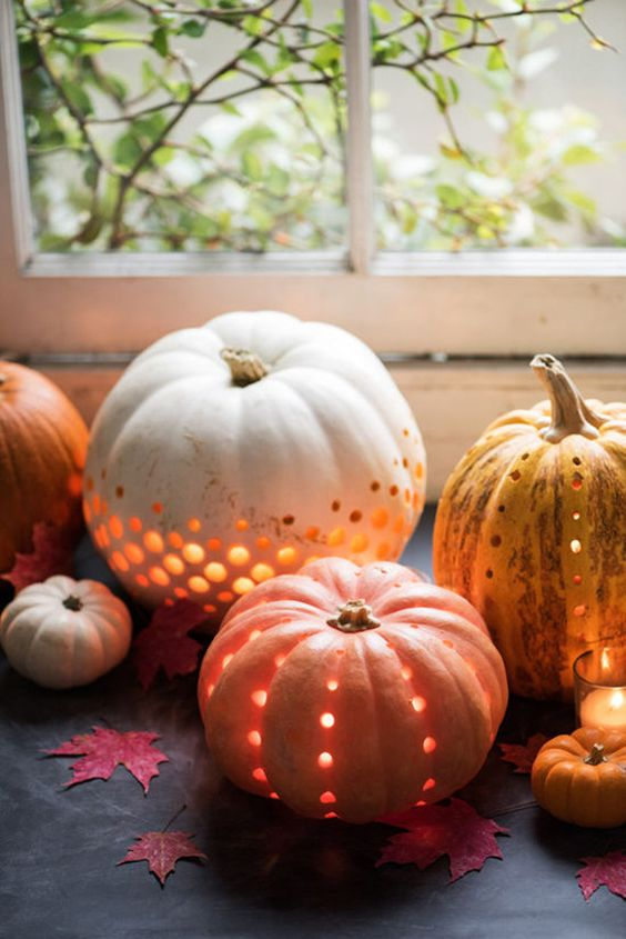 QuarterLifeLivingPumpkin1.jpg