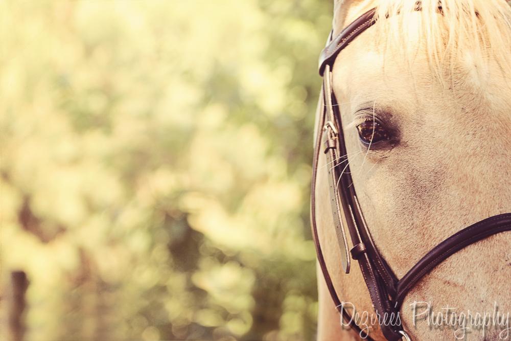 EquestrianPhotos-17.jpg