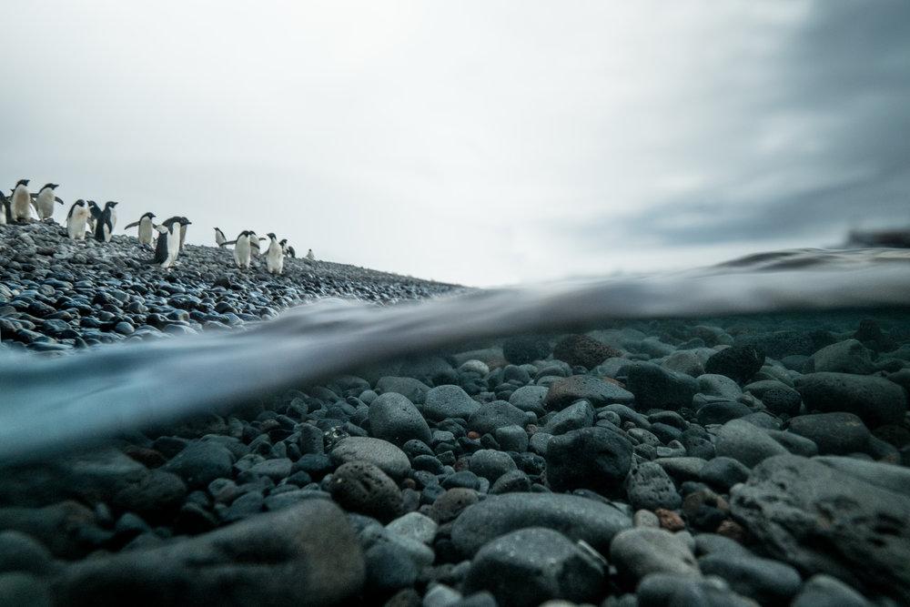 120-2017-Antarctica-a7r2-underwater-DSC08323-Edit.jpg