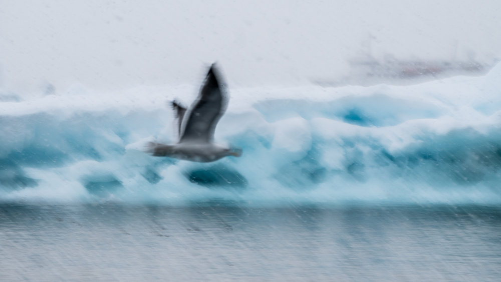 12-2017-Antarctica-a6500-DSC07119.jpg