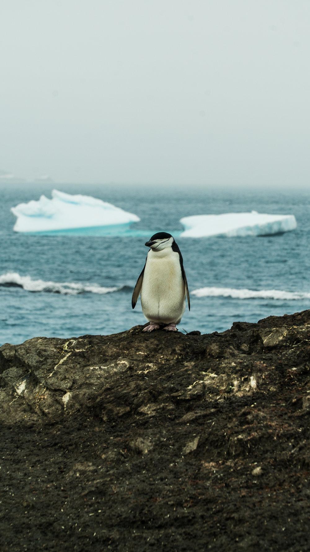 12-2017-Antarctica-a7s2-DSC04484.jpg