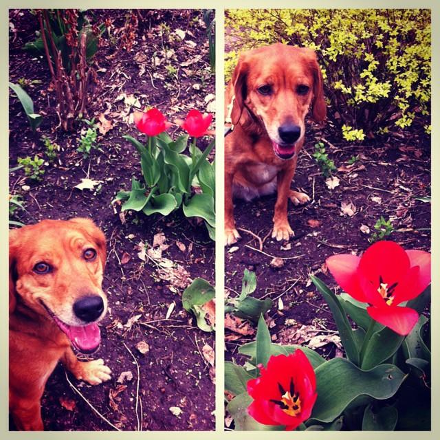 Happy Spring! #zoodog #stlzoo #khakishorts