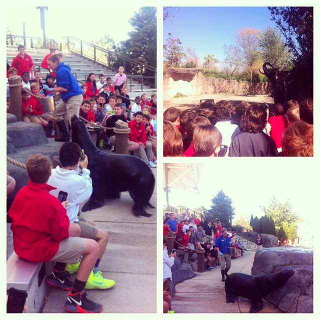 Chaminade field trip to the Zoo! Thanks sea lion and elephant keepers! :)