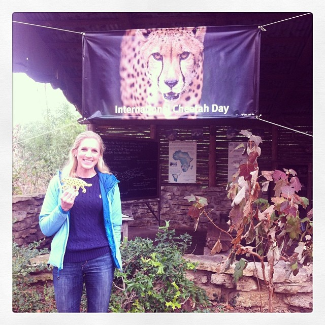 Cheetah Day Celebration!
