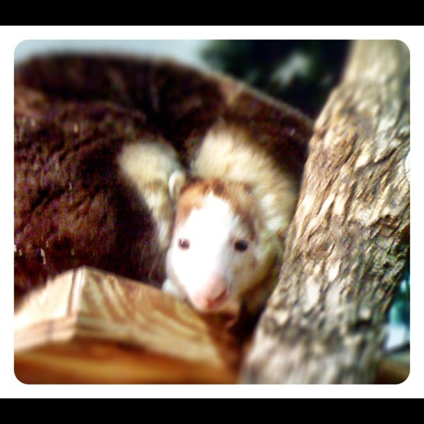 This cute, little face turned one today! Happy First Birthday Bexley the Tree Kangaroo!