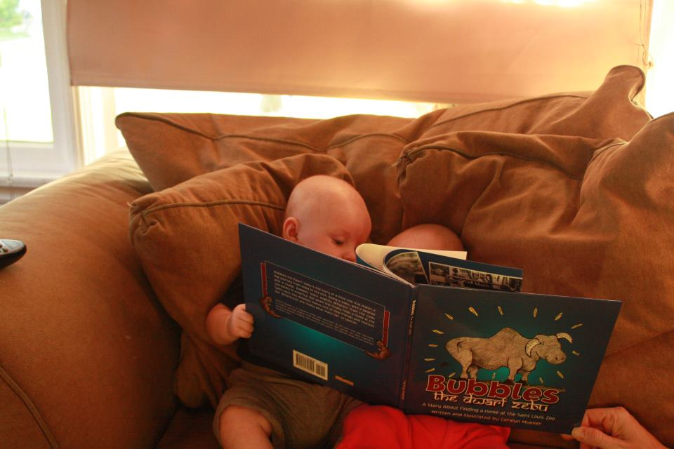You're never too young to enjoy a good dwarf zebu tale…