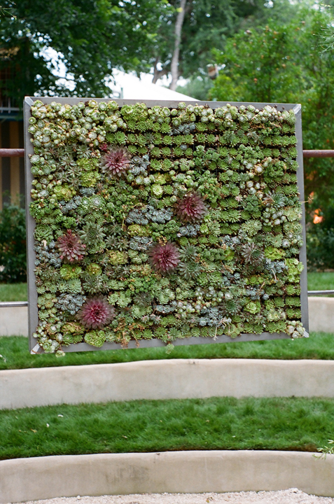 Living Wall For Wedding Ceremony Backdrop Photo Denise Prince