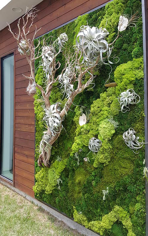 Exterior Residential Wall U0026nbsp;| U0026nbsp;air Plants, Sandblasted Wood,  Preserved Moss