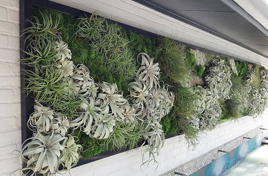 Merveilleux Air Plant Exterior Living Wall
