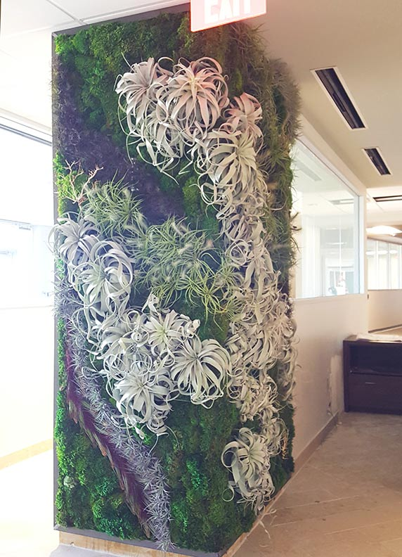 Corner Wrap Around Living Wall In AffiniPay Offices