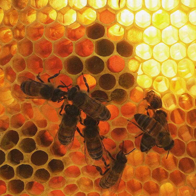 TXBW-bees-2.jpg
