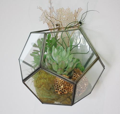 hexagon-wall-terrarium-web.jpg