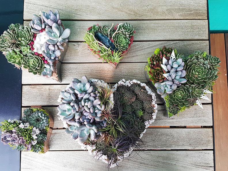 heart-succulent-arrangements-web.jpg