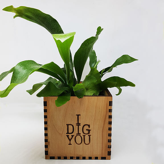 I-Dig-You-plant-web.jpg