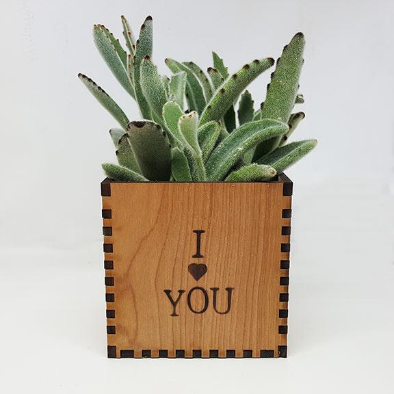 I-Love-You-plant-web.jpg