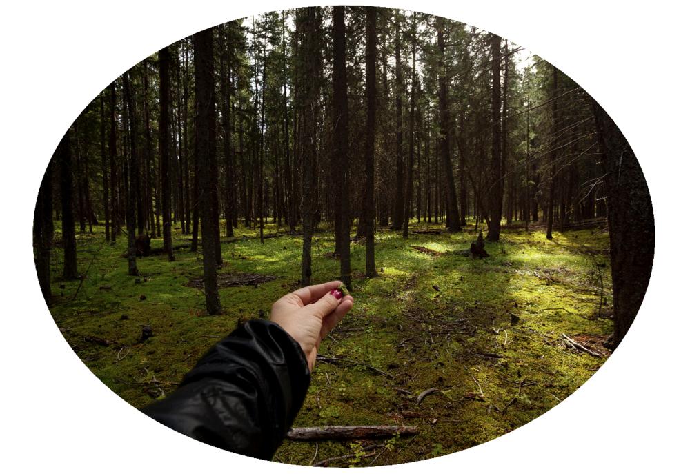 Muestra de musgo tomada del Bosque Nacional de Banff, Canadá.