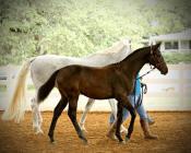 Omega    Soprano x Osage Princess   Foaled 3/25/14