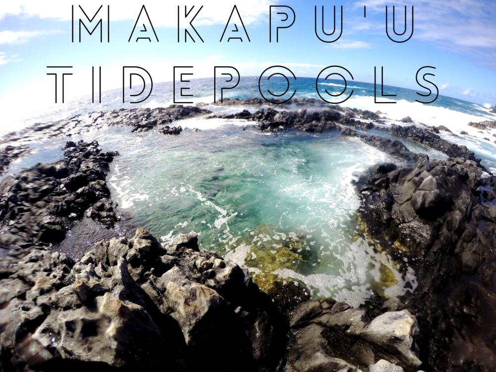 Makapu'u Tidepools + SaltWaterVibes