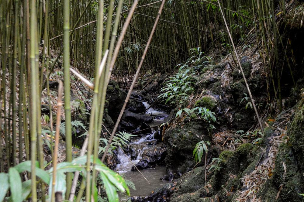 Bamboo Forest Hike + SaltWaterVibes