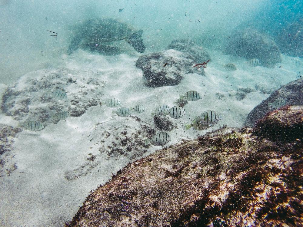 Turtle Beach Maui + SaltWaterVibes