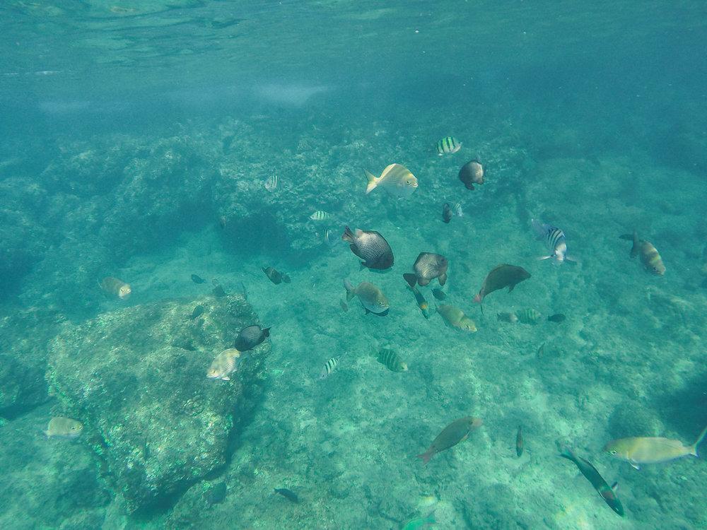 Black Rock Beach + SaltWaterVibes