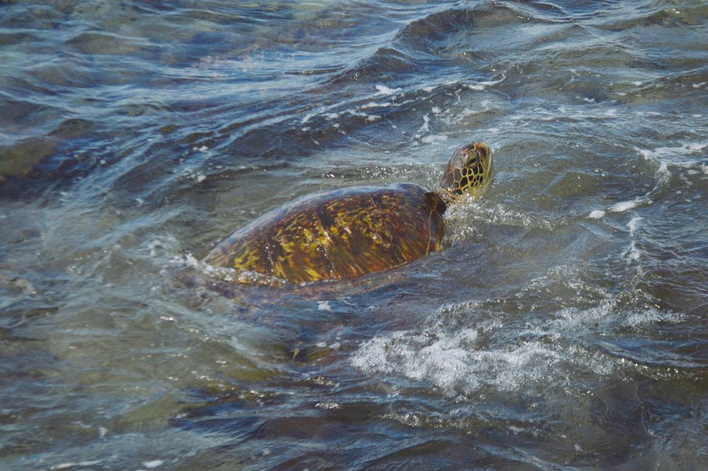 Turtle Town Maui + SaltWaterVibes