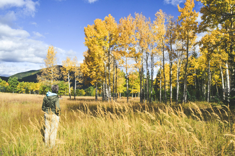 Colorado, Fall in Colorado, Where to see Aspens in Colorado, Golden Aspens, Rocky Mountain Gold, Colorado adventures, Kenosha Pass, Guanella Pass, Meridian Colorado, Colorado Hikes, Fall Hikes, SaltWaterVibes, Mountain Adventures, Mountain Escapes