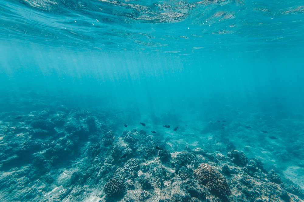 Knowing: 5 Things You Can Do To Save The Ocean Today | SaltWaterVibes