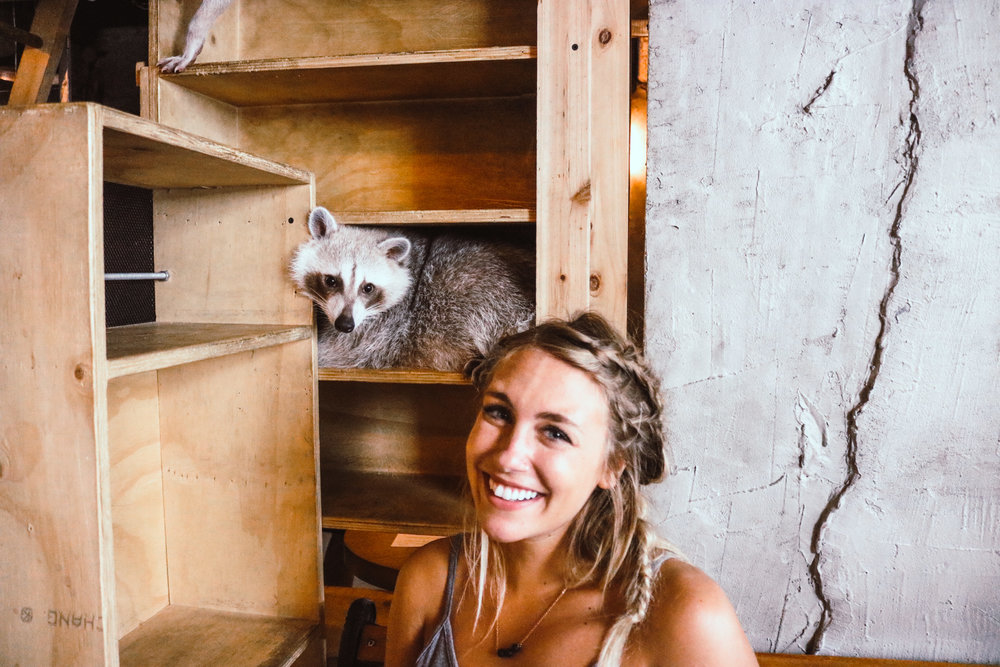 Seoul Raccoon Cafe | SaltWaterVibes