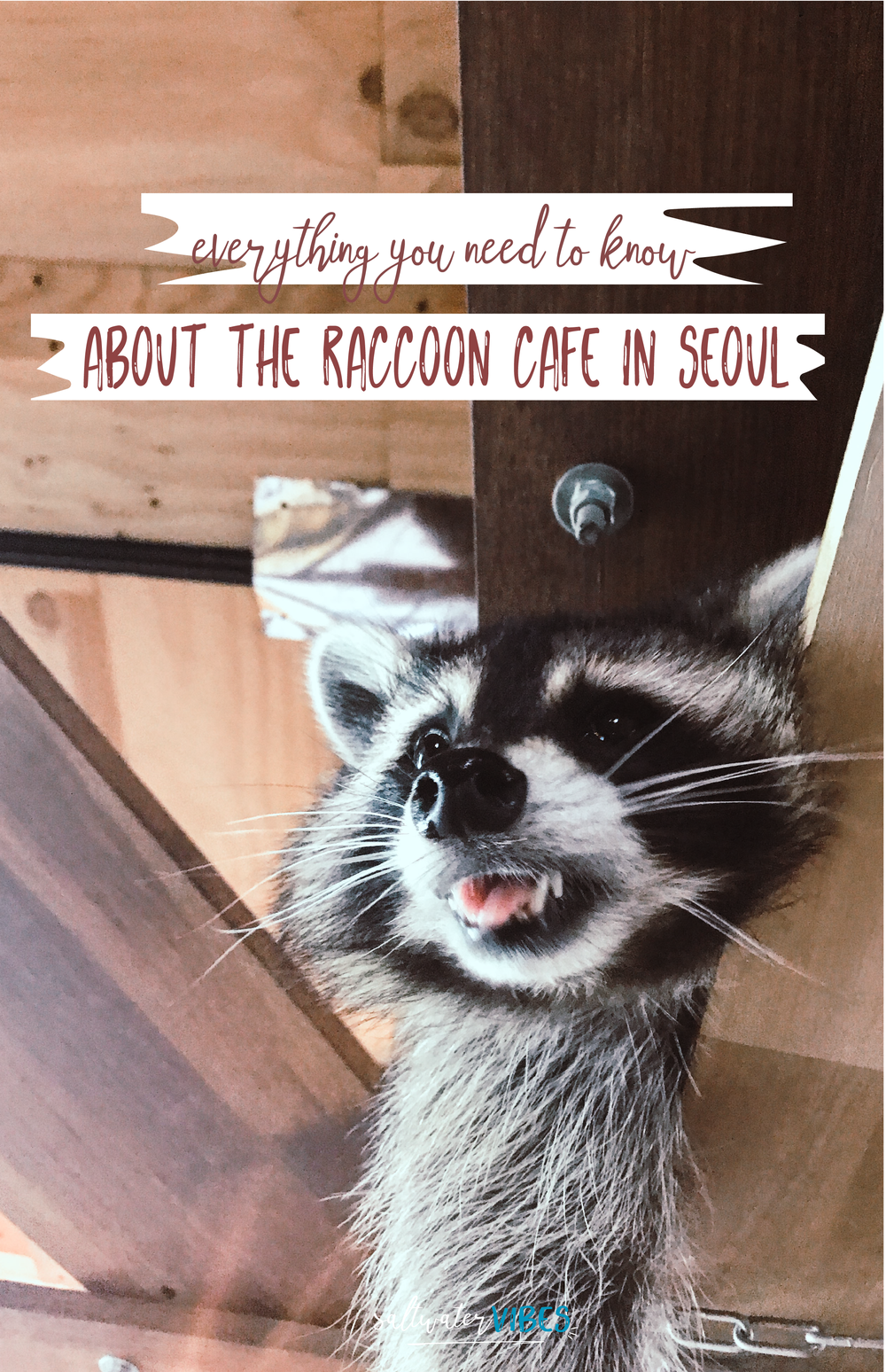 Raccoon cafe pins-02.png