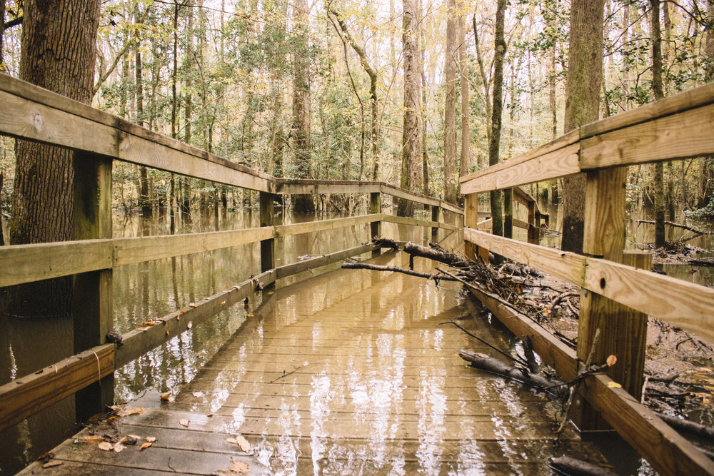 Congaree National Park | SaltWaterVibes